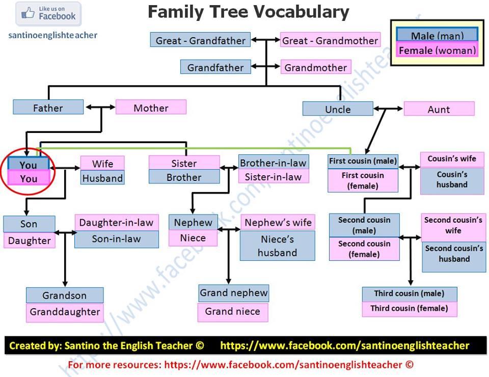 Vocabulary: Family Tree - The crazy teacheru0026#39;s blog The ...